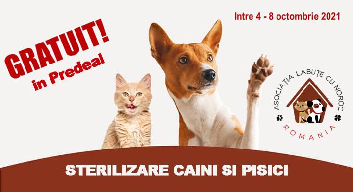 Campanie de sterilizare gratuită pentru caini si pisici